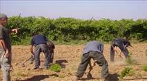 """לכבוד ט""""ו בשבט: סיכום עצי הפרי במדינת ישראל"""
