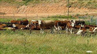 פועלים להגברת האכיפה כנגד הפשיעה החקלאית