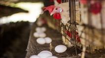 כמה ביצים דגים ועוף נרכשו לקראת החג?