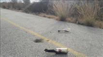 ירושלים: ערבים השליכו בקבוק תבערה על רכב
