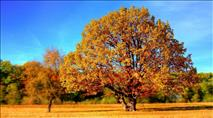לטעום מעץ החיים
