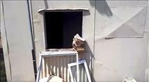 מבנה של השומר החדש הושחת וספרי קודש הוצתו