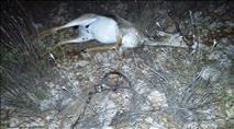 19 ערבים חשודים בהפעלת רשת ציד של חיות מוגנות