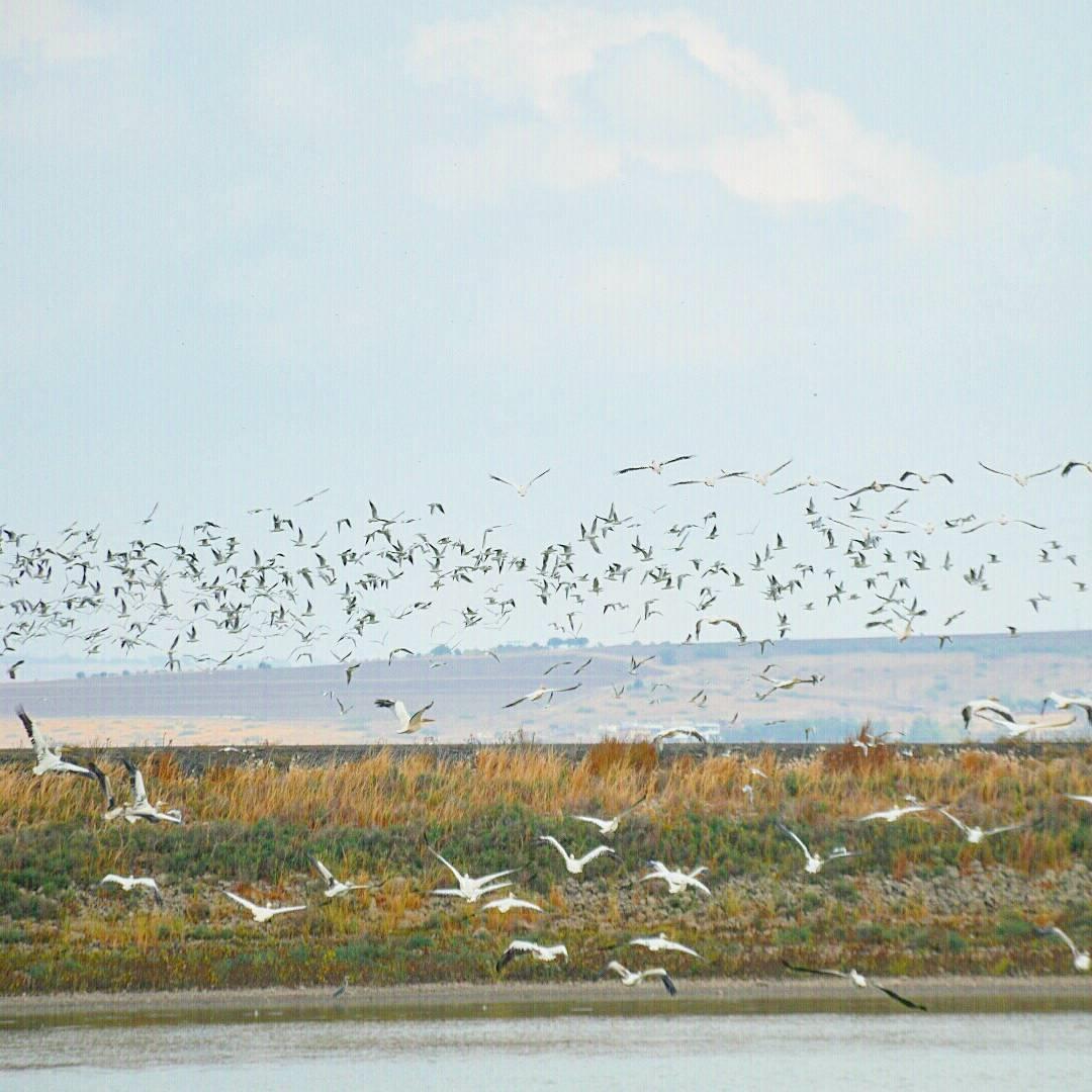 נדידת ציפורים בעמק יזרעאל. צילום: פלג אמתון/TPS