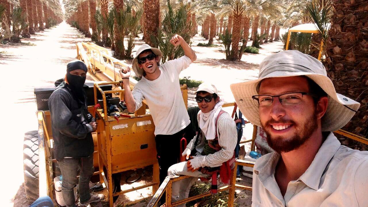 """עובדים יהודים לצד העובדים הזרים בתכנית """"עבודה עברית"""" בערבה צילום - מועצה אזורית ערבה תיכונה"""