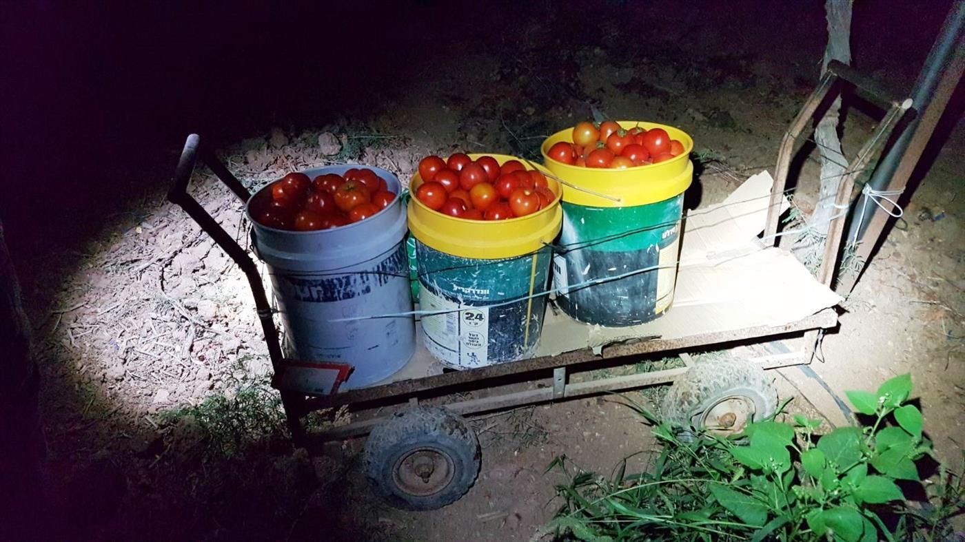 """הגניבה חקלאית במושב שקף. צילום: דוברות מג""""ב"""