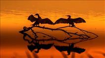 צפו: מספר שיא של עגורים באגמון החולה