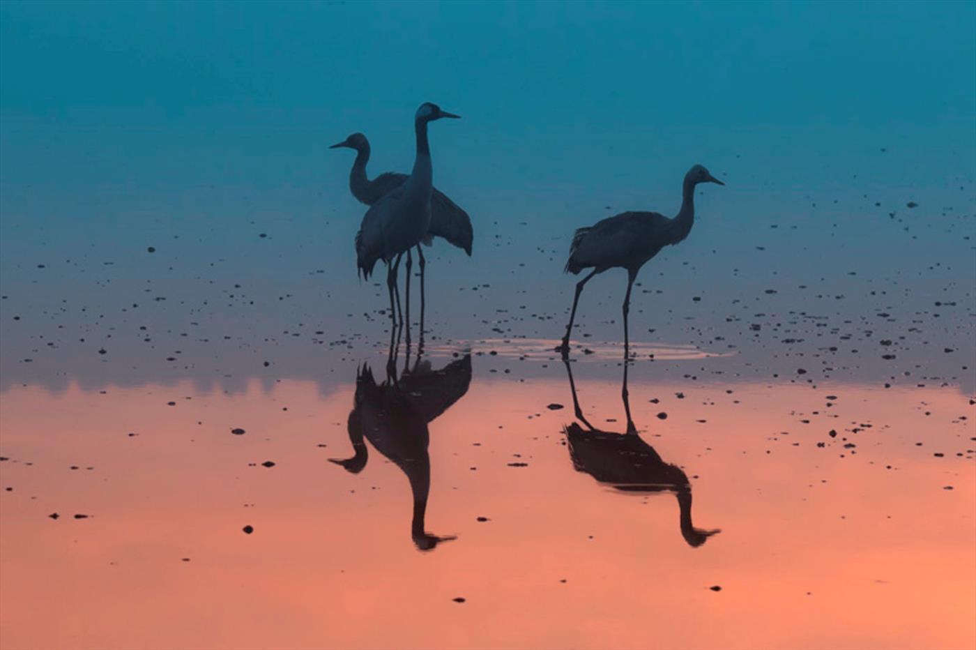 צפו: גלריית צילומי טבע מרהיבה מתערוכה חדשה
