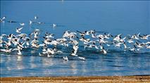 תצפית על העופות הנודדים, פריחה והיסטוריה