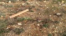בפעם השלישית השבוע: ערבים עקרו עצים ליד יצהר