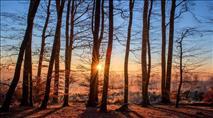 שיטוט ביער ההכרה