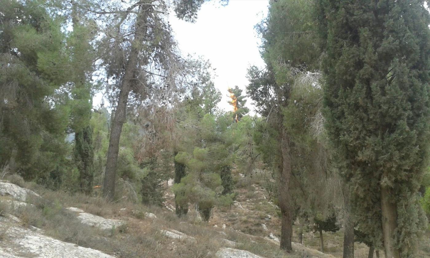 שריפת יער בגוש עציון (צילום: דוברות מועצת גוש עציון)