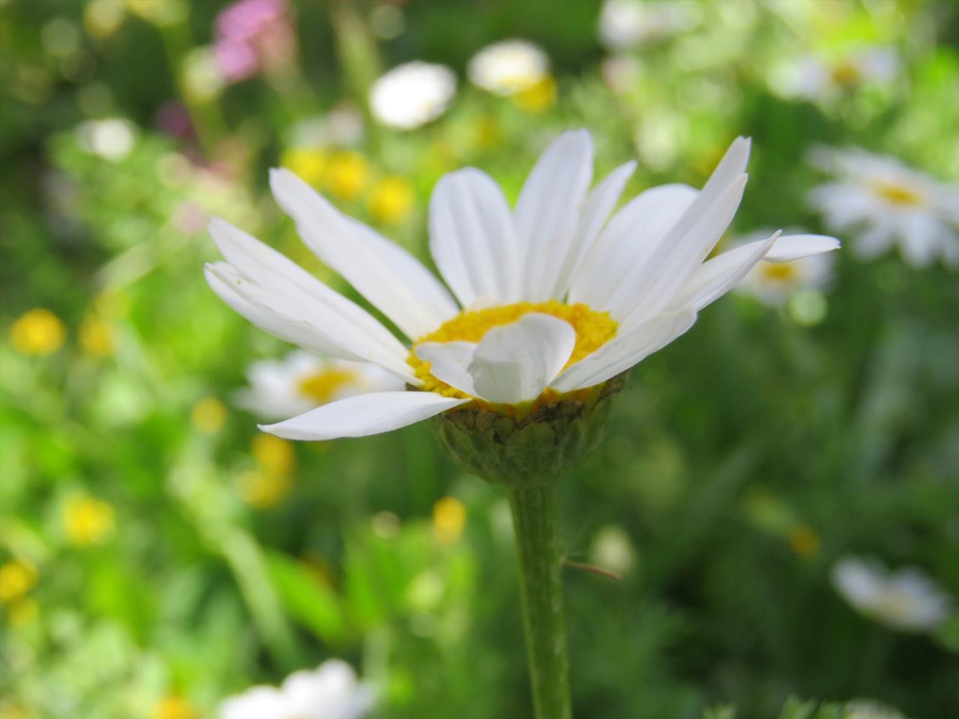 פרחים בטיול עמיתים לטיולים (ירון בוצר)