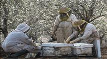 מועצת הדבש:  800 טון דבש לחג ולמימונה