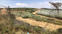 הטרור החקלאי בגוש עציון: גניבת ענק וצלב קרס
