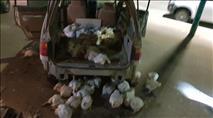 המשטרה: עלייה בגניבת עופות ובקר לקראת הרמדאן