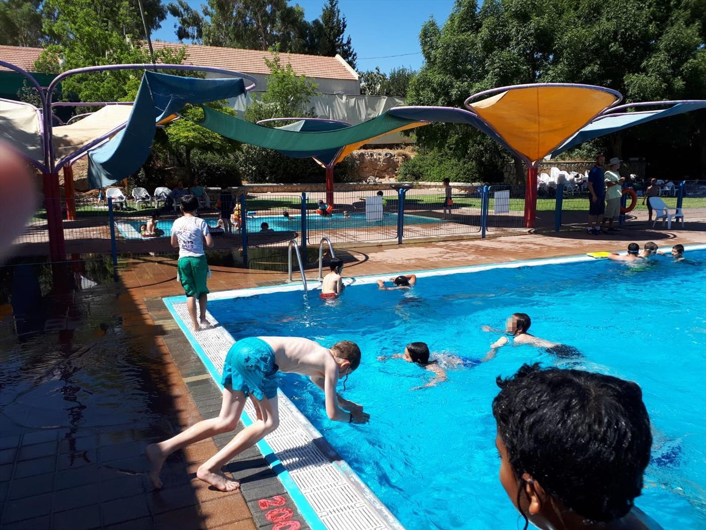 ילדי תלמודה התורה בבריכה (באדיבות המצלם)