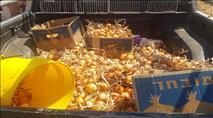 נעצר ערבי שגנב תוצרת חקלאית מקיבוץ יזרעאל