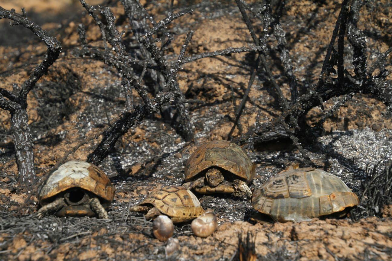 """שריפה בעוטף עזה  (צילום: עובדי קק""""ל)"""