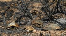 חצי שנה להצתות: חצי מיערות הנגב המערבי נשרפו