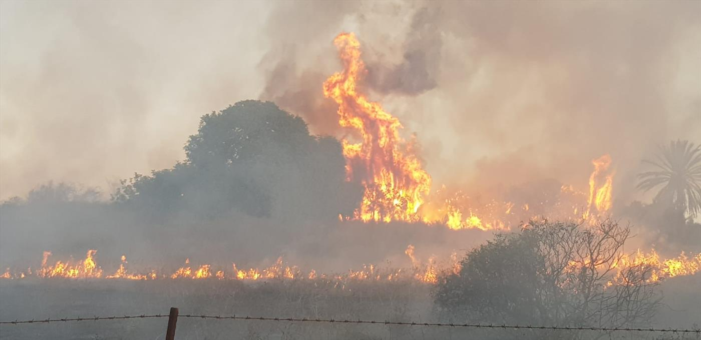 שריפה בשמורת גברעם. ארכיון (צילום: משה מרדכי, יערן קק״ל)