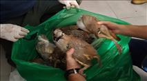 ערבים צדו ציפורים מוגנות ברמת הגולן