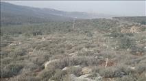 ערבים נטעו מיליוני עצים - המנהל האזרחי לא פעל