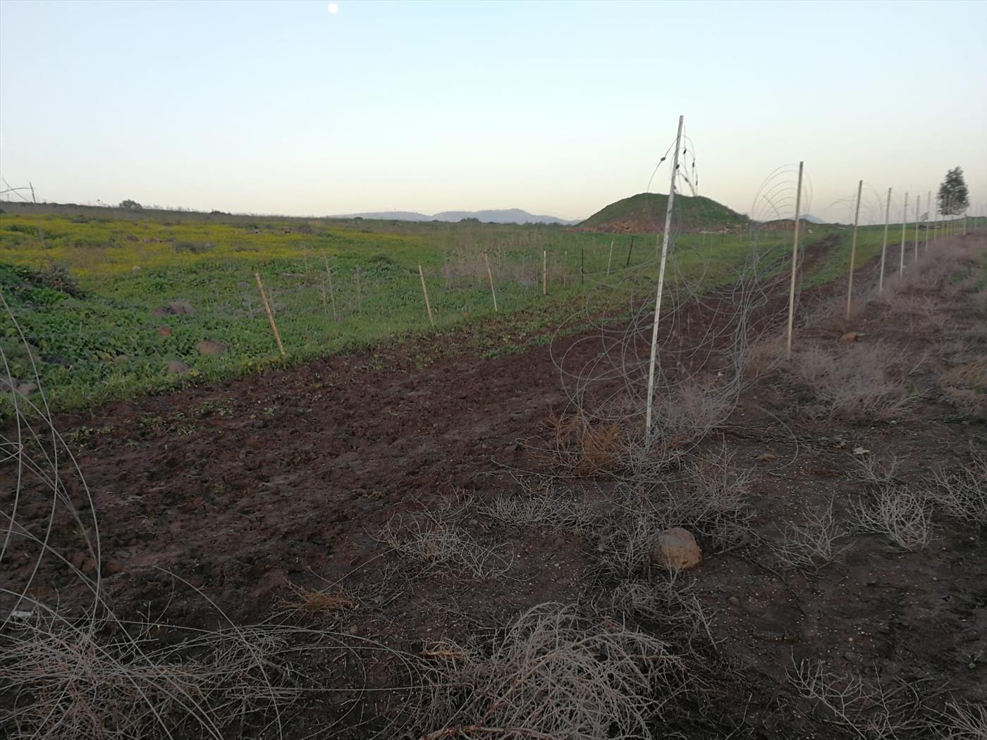 גדר הלולים שהושחתה (כפר הנשיא)