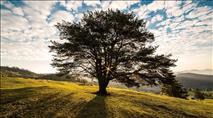 ראש השנה לעצים: עץ החיים - פנימיות התורה