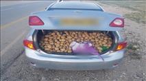 משפחה בדואית 'מילאה' רכב בתפוחי אדמה גנובים