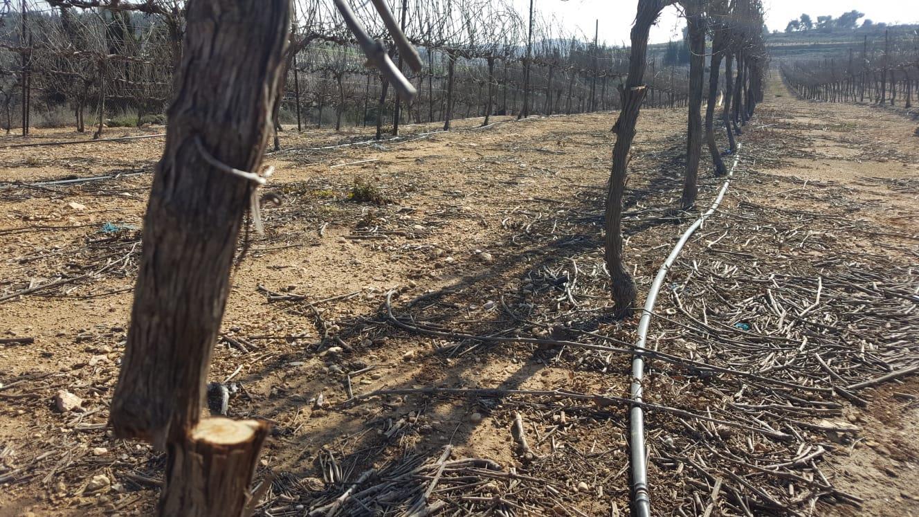 הפגיעה בעצים (בטחון כפר עציון)