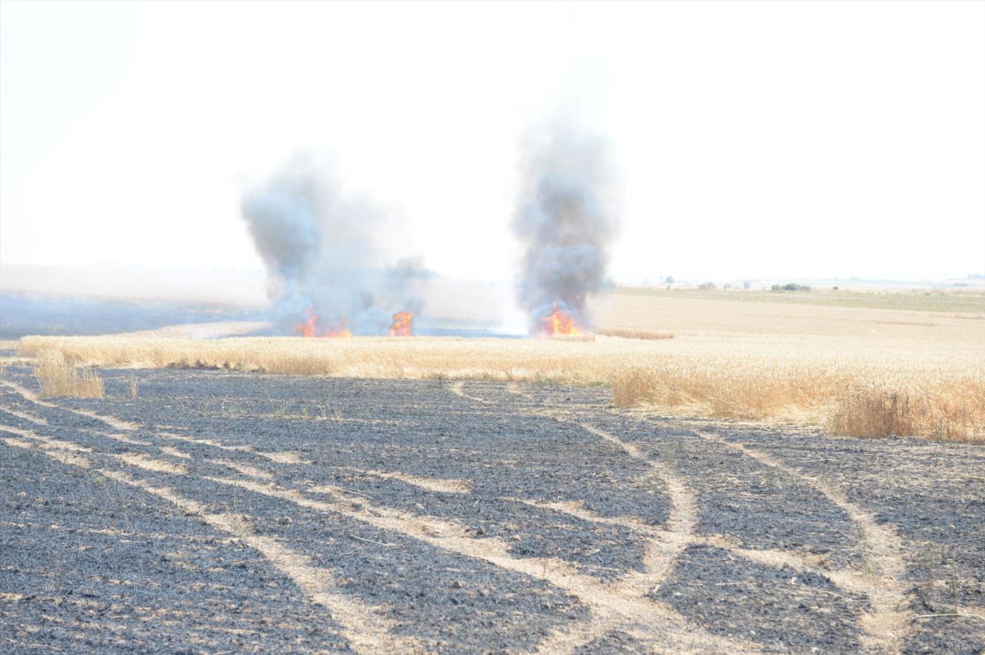תשע שריפות - מאות דונמים של חיטה עלו באש
