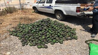 ערבים גנבו ממעסיקם היהודי חצי טון פרי