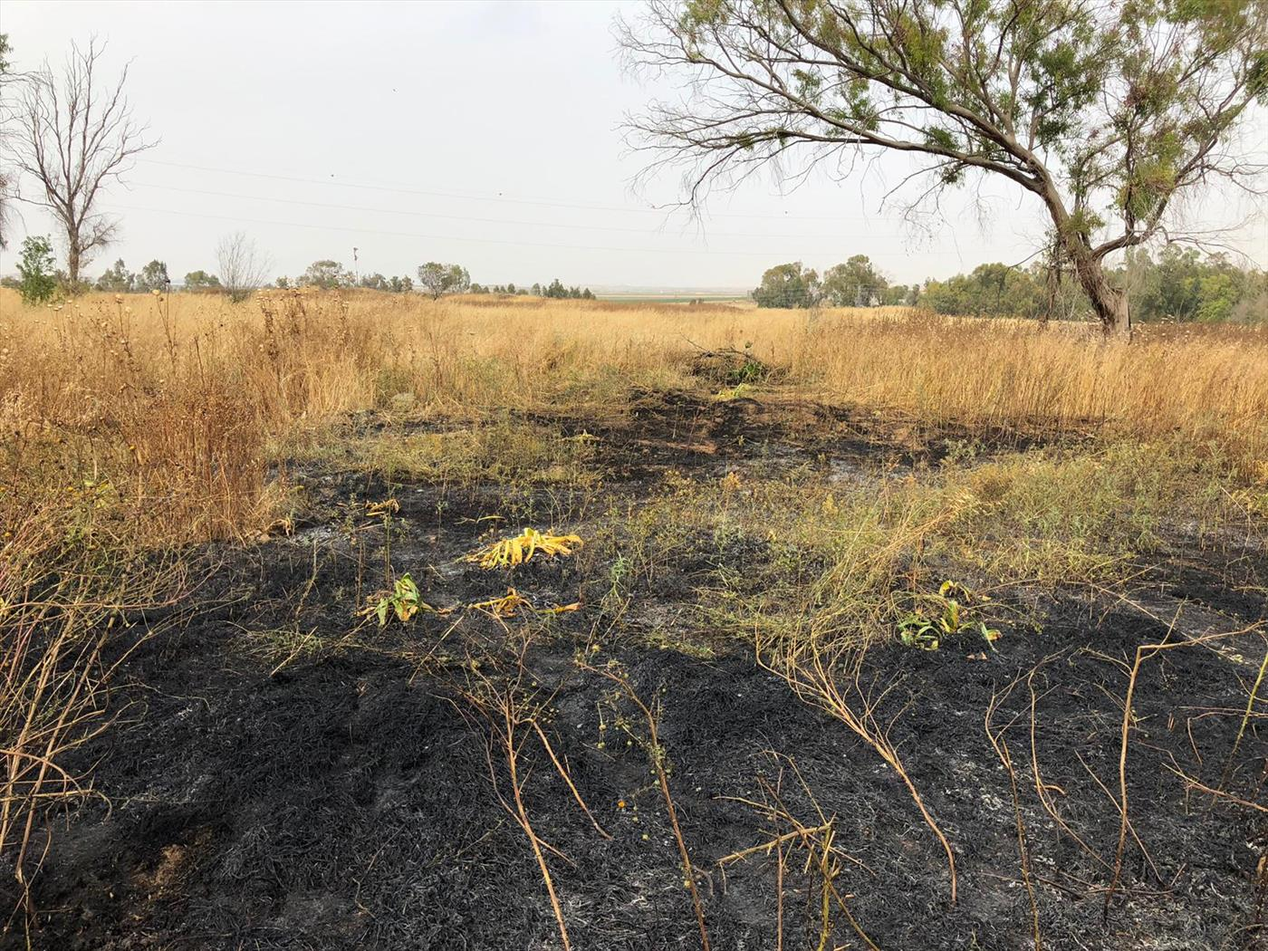 השריפה בנחל עוז  (צילום: חדשות 24/7 בפייסבוק)