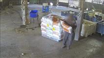 ניצל את האמון שניתן בו: עובד ערבי גנב כבשים ושקי חלב