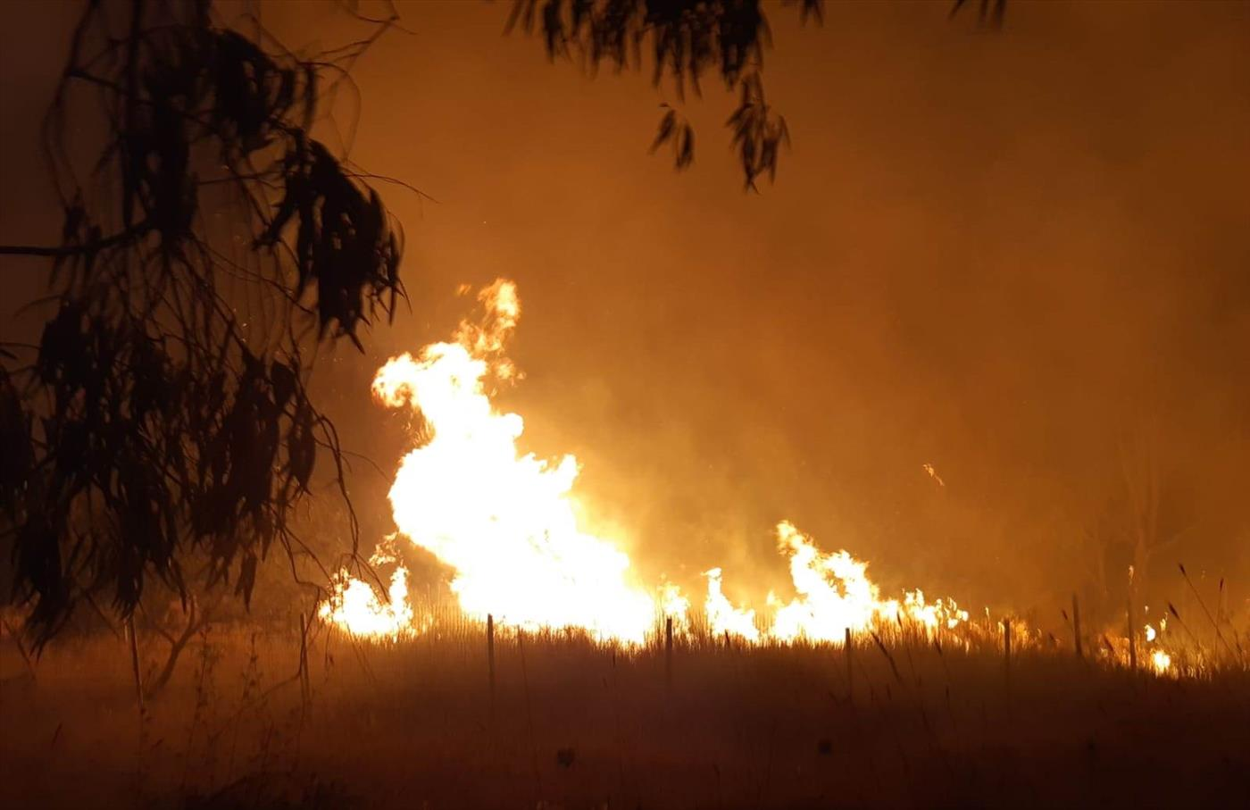 שריפה הלילה סמוך לאלעד (צילום: כבאות והצלה)