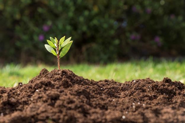 תחקיר הוא כמו צמח – לפני שנה זרענו, היום רואים פירות