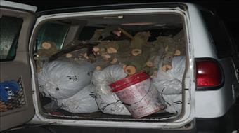 """נתפסו ערבים שגנבו מאות ק""""ג של זיתים בגליל"""
