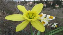 פריחה נדירה: לראשונה בארץ פרח צמח הפרמונגאיה