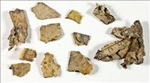 תגליות מסעירות במבצע אתגרי של רשות העתיקות במדבר יהודה