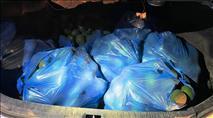 """הטרור החקלאי נמשך: 2 בדואים גנבו מאות ק""""ג אבוקדו ממטעים בנגב"""