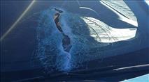 פצוע בינוני בפיגוע זריקת אבנים סמוך לקרני שומרון