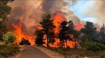 שריפה גדולה סמוך לנווה אילן - הושגה שליטה על האש