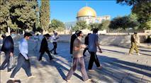 המשטרה ערערה - המחוזי אסר תפילת יהודים בהר הבית