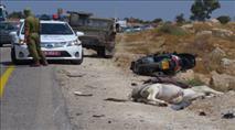 כביש אלון: אופנוען התנגש בחמור