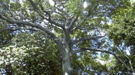 """העץ היהודי • מאמר לט""""ו בשבט"""
