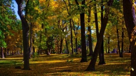 הקול ביער