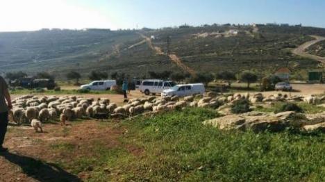 """בחסות צה""""ל: ערבים חורשים בגוש שילה"""