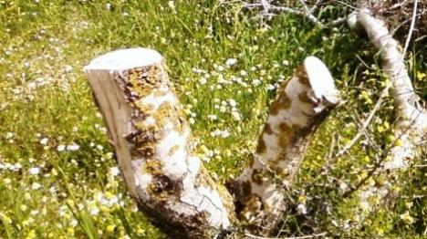 עצים כרותים בהר חברון – כתובות בשומרון