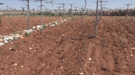 עשרות עצים נכרתו בגוש עציון